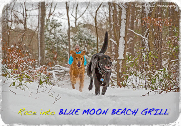 Get outta the house and into Blue Moon Beach Grill! Reopening January 31st
